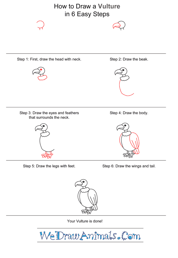 How to Draw a Vulture for Kids - Step-by-Step Tutorial