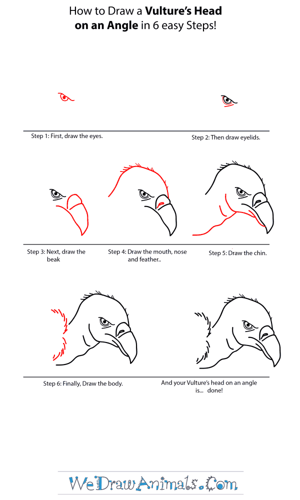 How to Draw a Vulture Head - Step-by-Step Tutorial