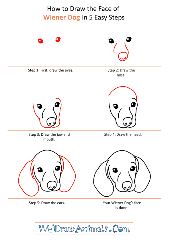 How to Draw a Wiener Dog Face - Step-by-Step Tutorial