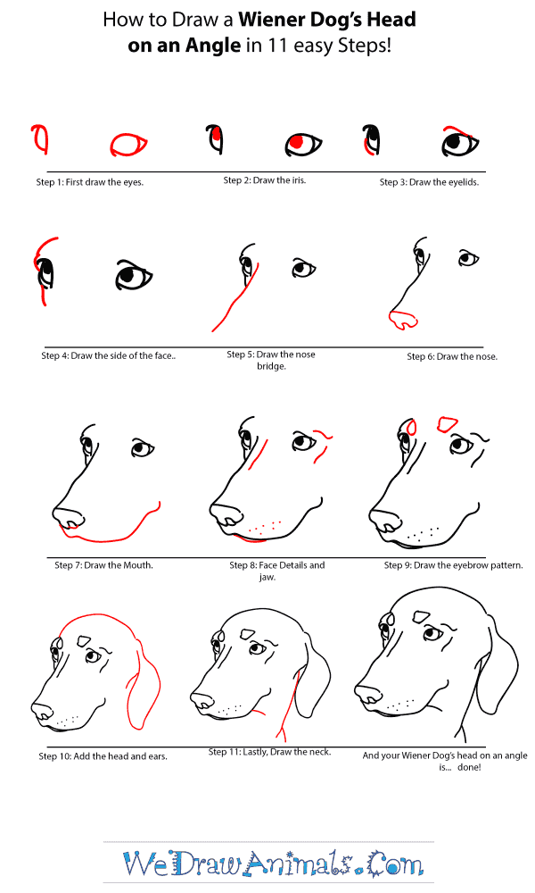 How to Draw a Wiener Dog Head - Step-by-Step Tutorial