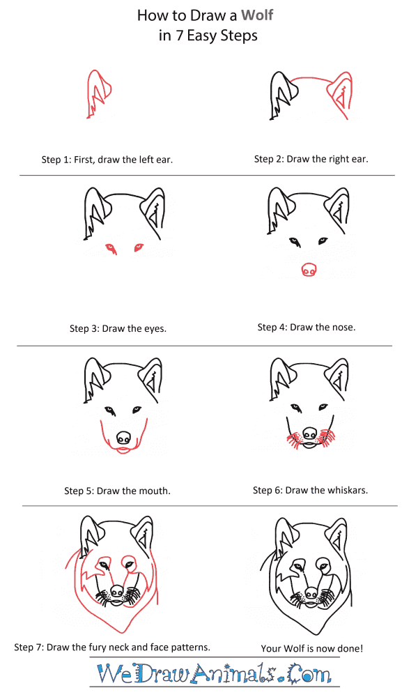 How to Draw a Wolf Pup Head - Step-by-Step Tutorial