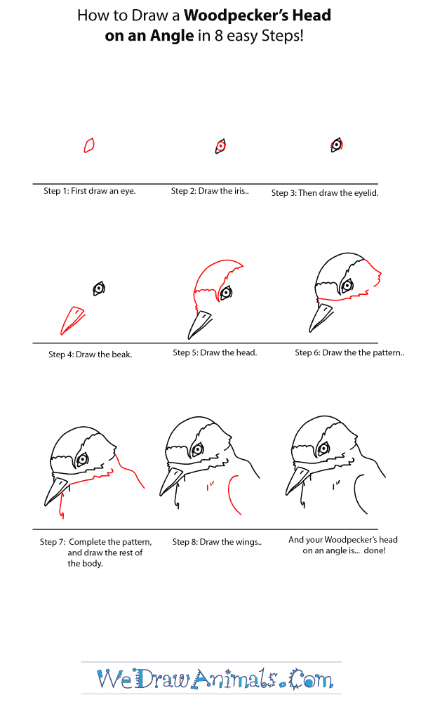 How to Draw a Woodpecker Head - Step-by-Step Tutorial